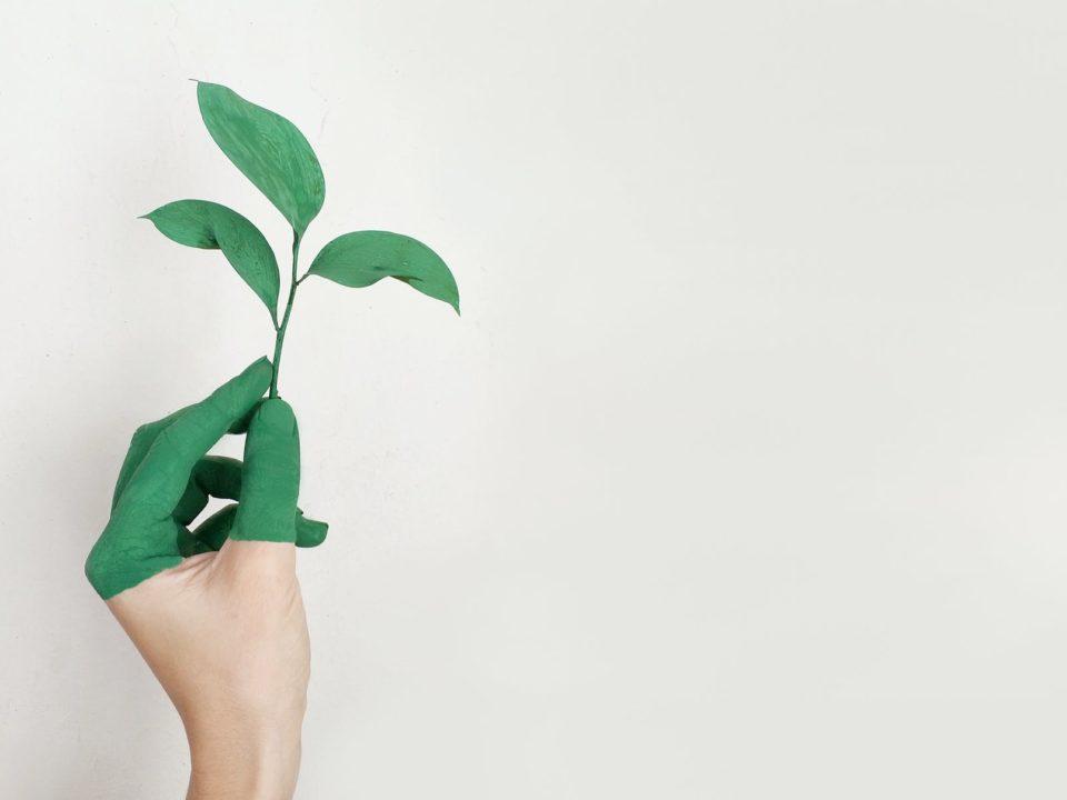 Ilustrasi startup ramah lingkungan di Indonesia yang bergerak menjaga sustainability